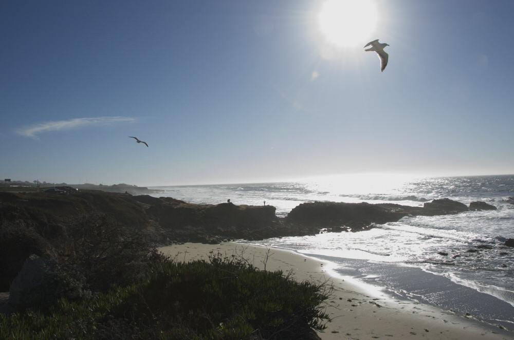 Pescadero beach with gull