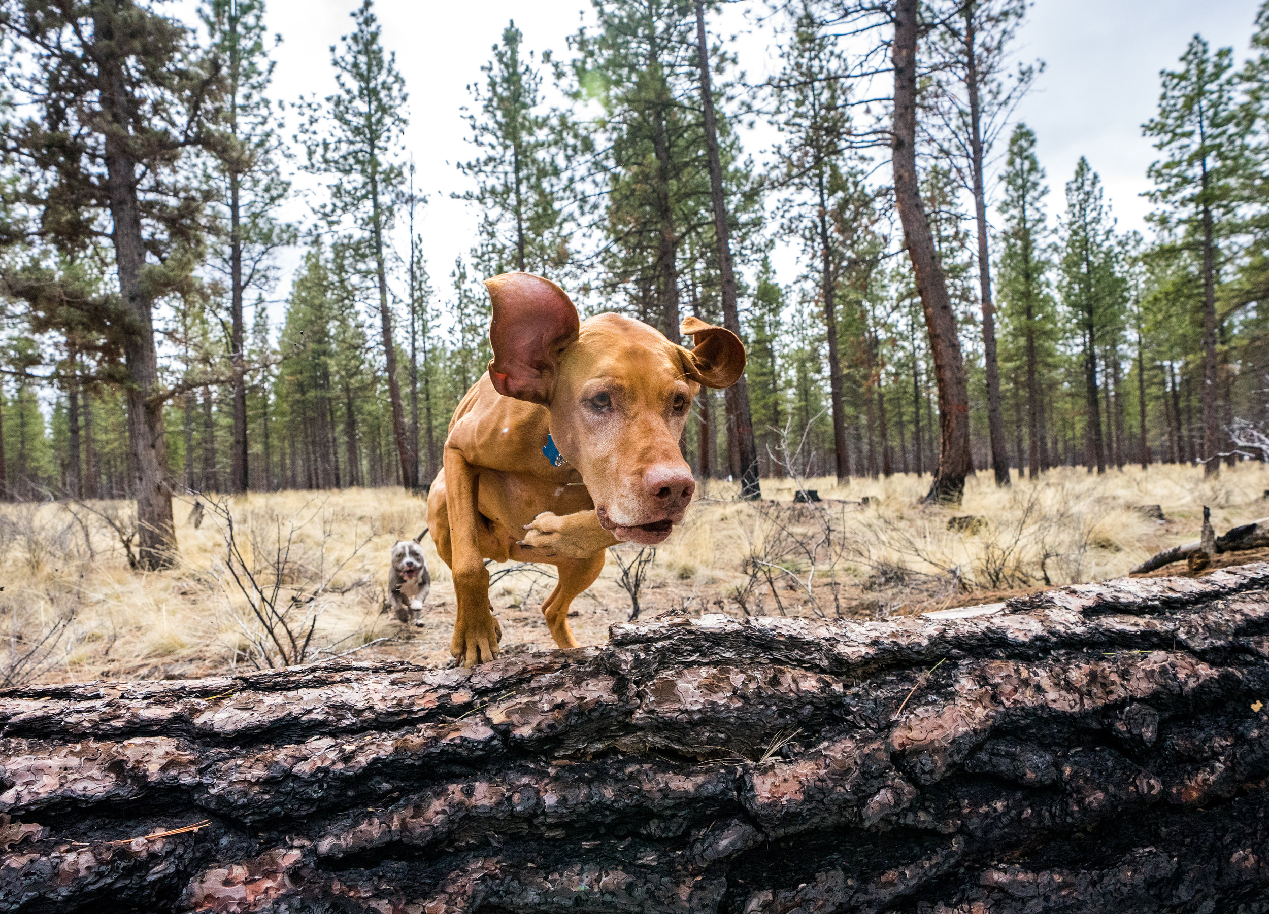 Dogphotos13.jpg