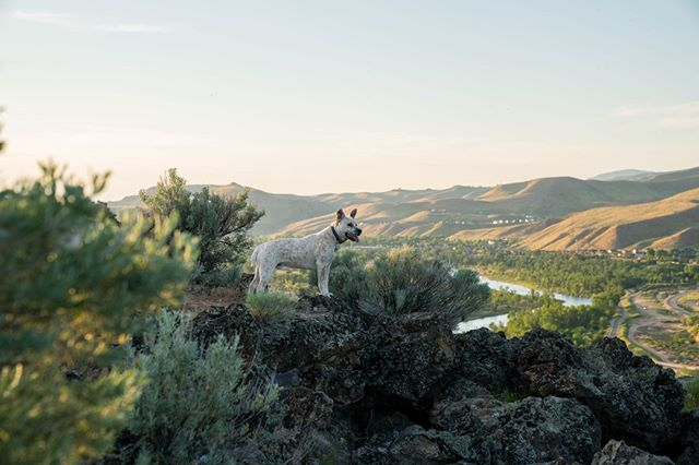 @m.schenk_ pup Finn takes in the Boise views.