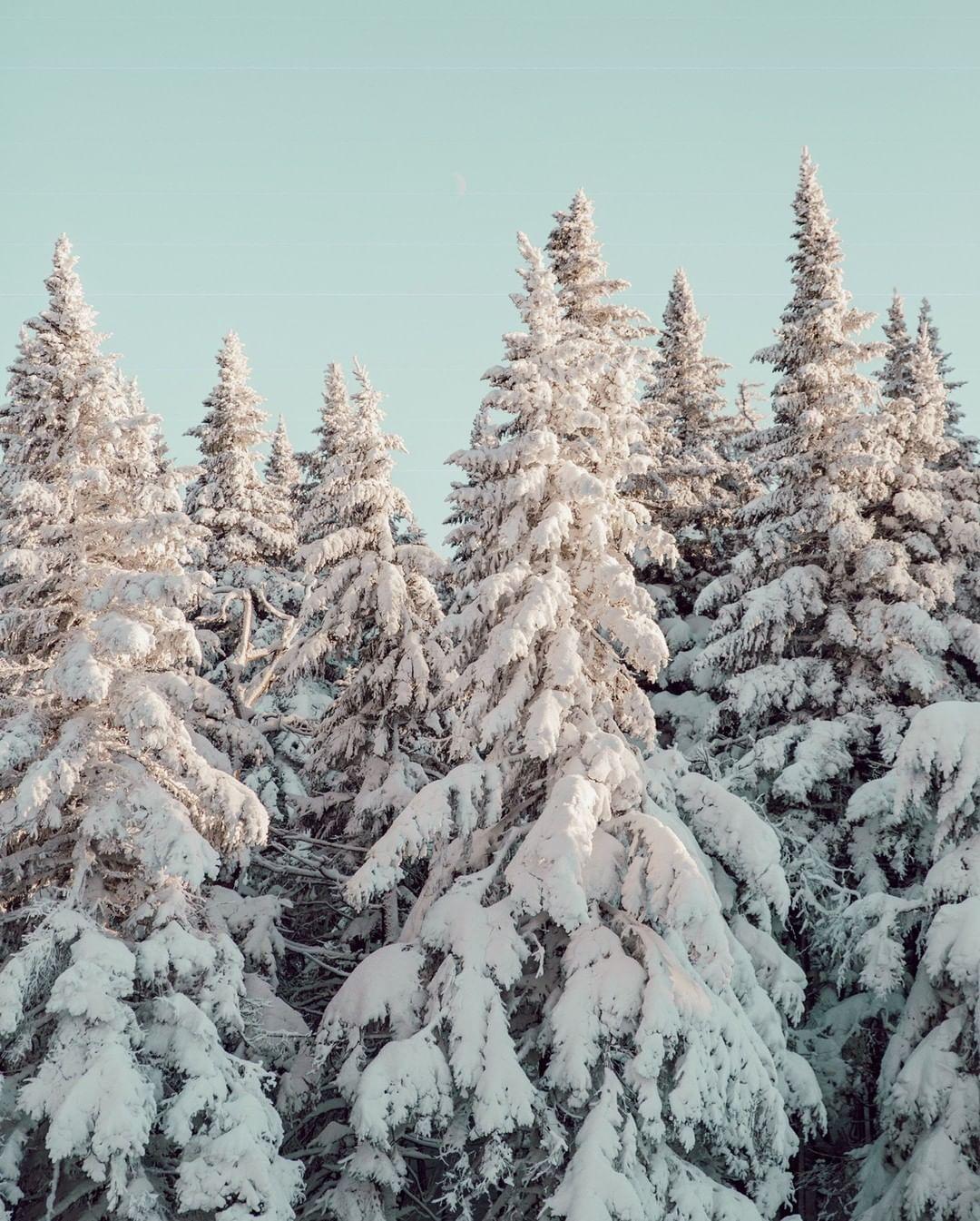 Winter Vacation -