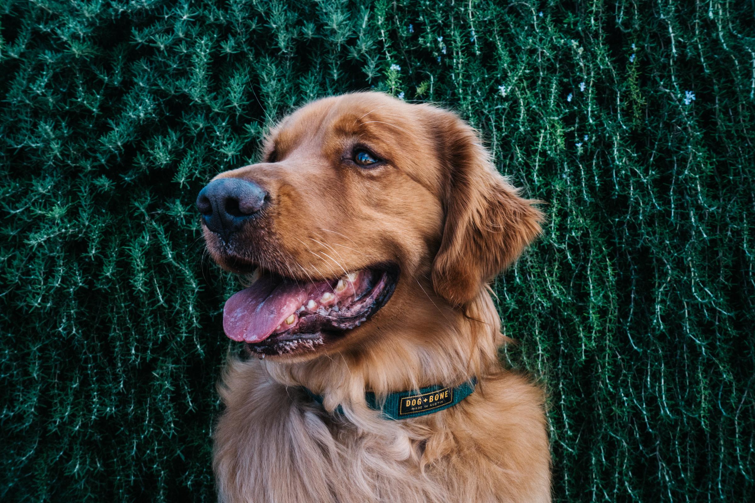 dogplusbone-3.jpg