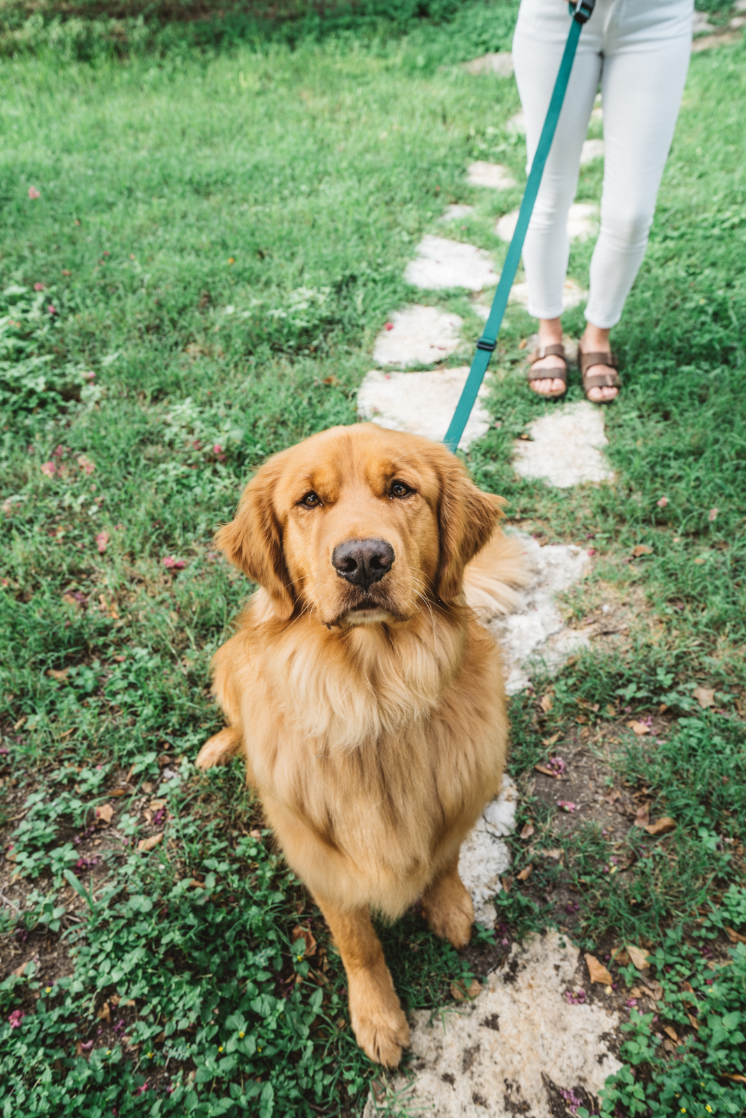 dogplusbone-6.jpg