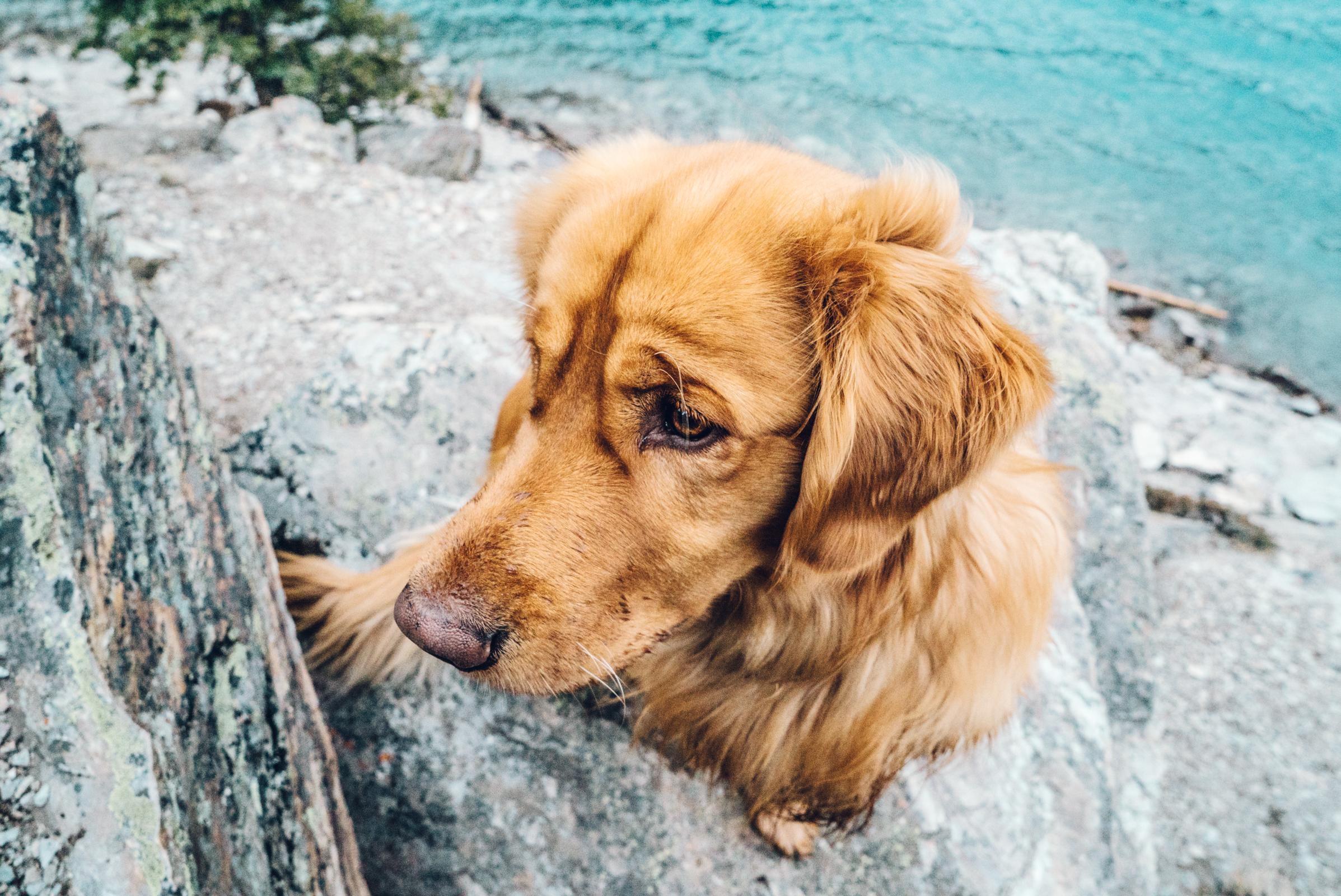 Aspen The Mountain Pup Canada