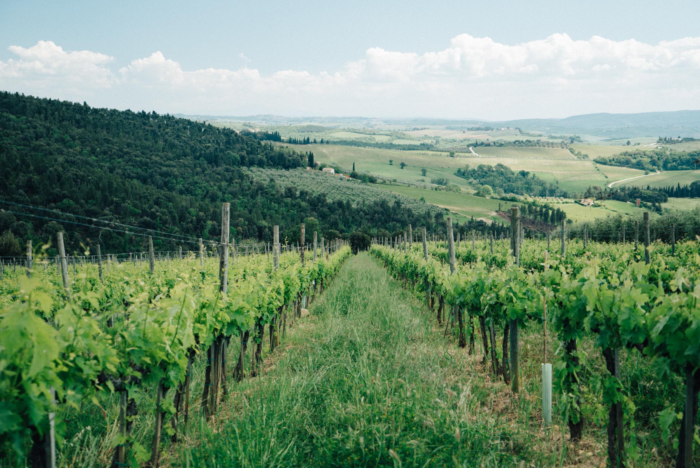 best winery tuscany italy