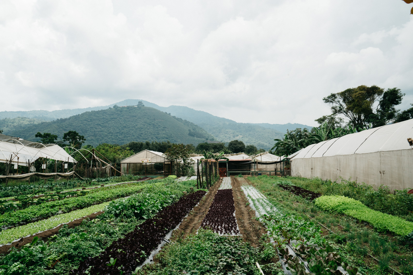 guatemala-38.jpg