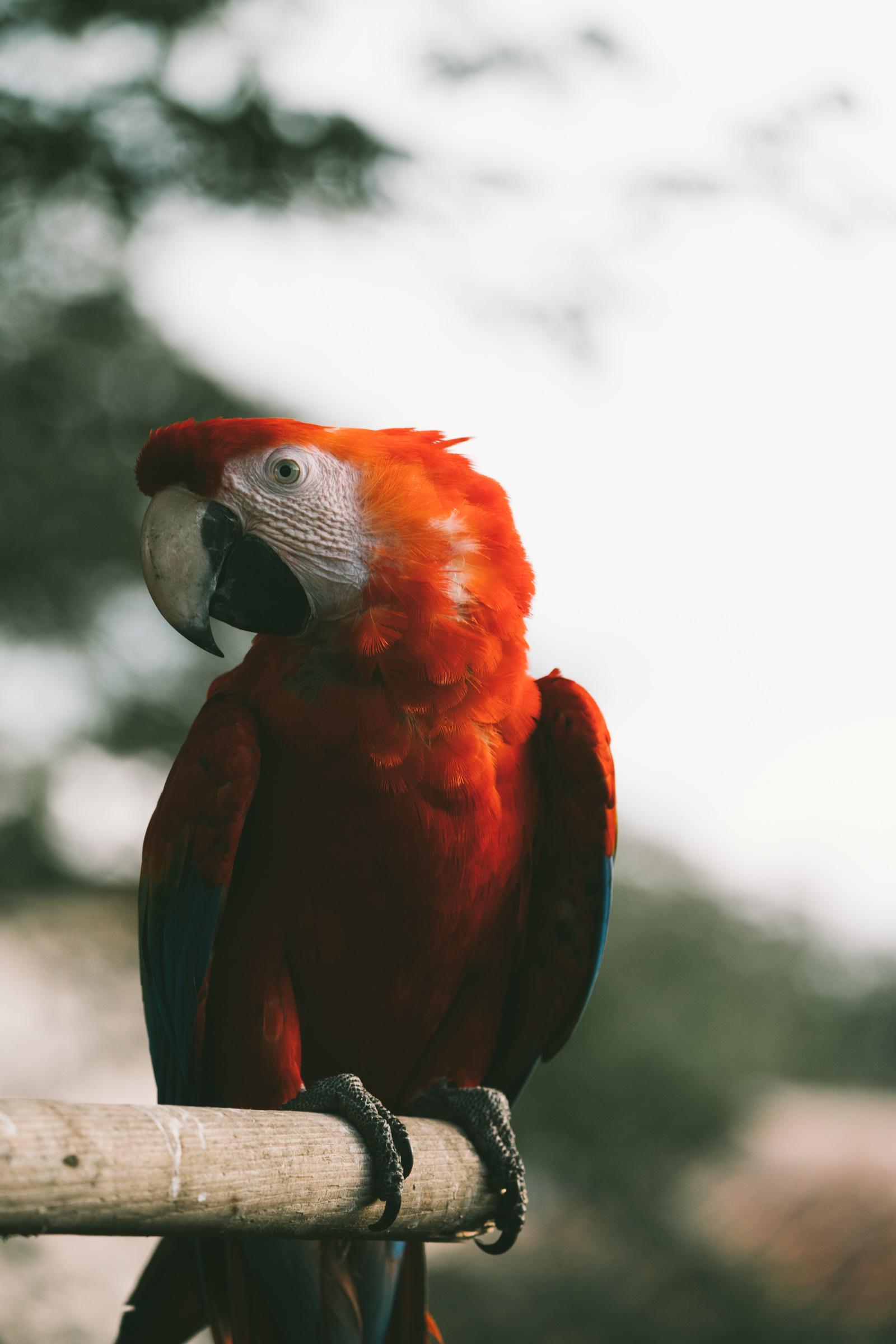 guatemala-44.jpg