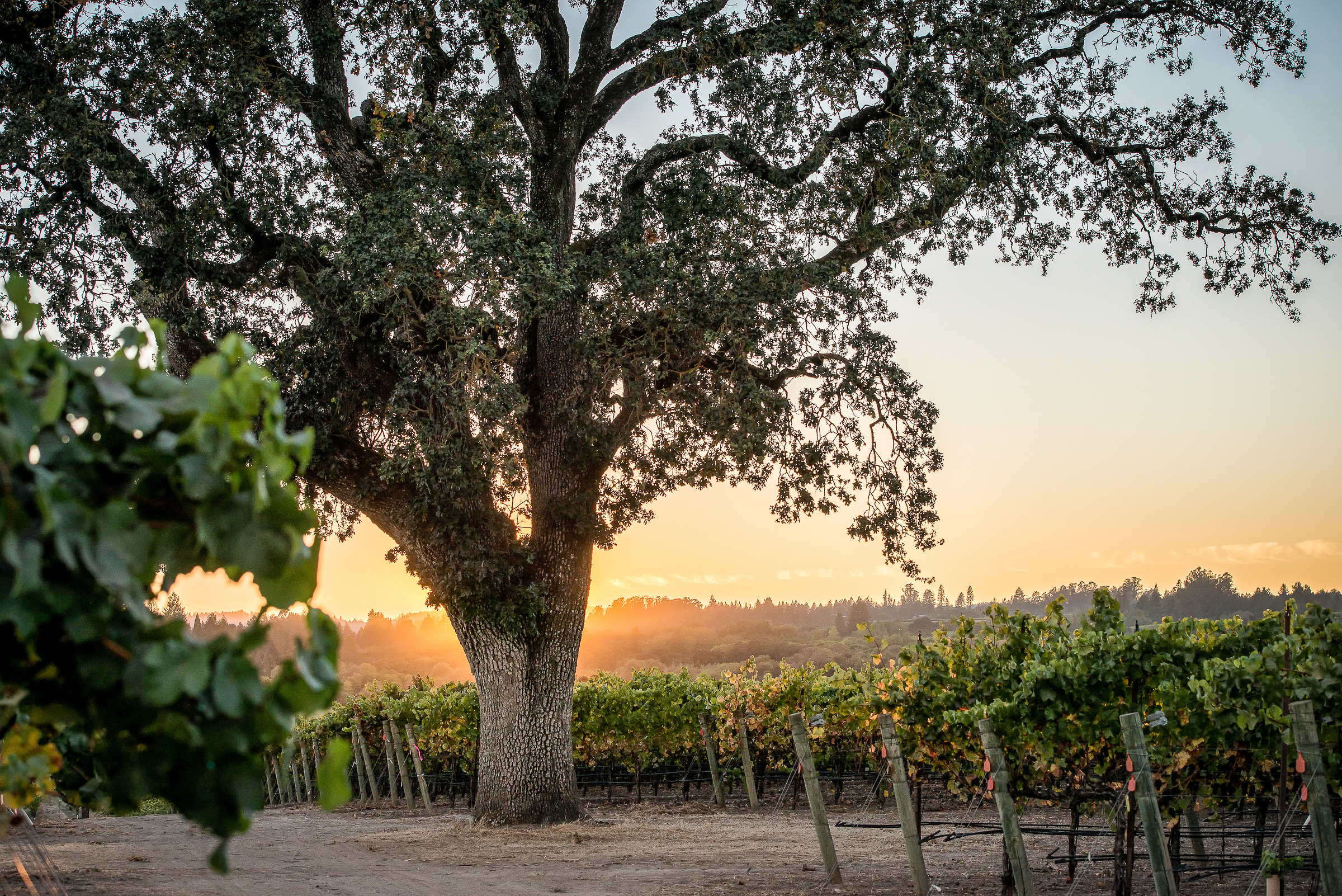 Balletto Vineyards Photo credit Christopher Harrison.jpg