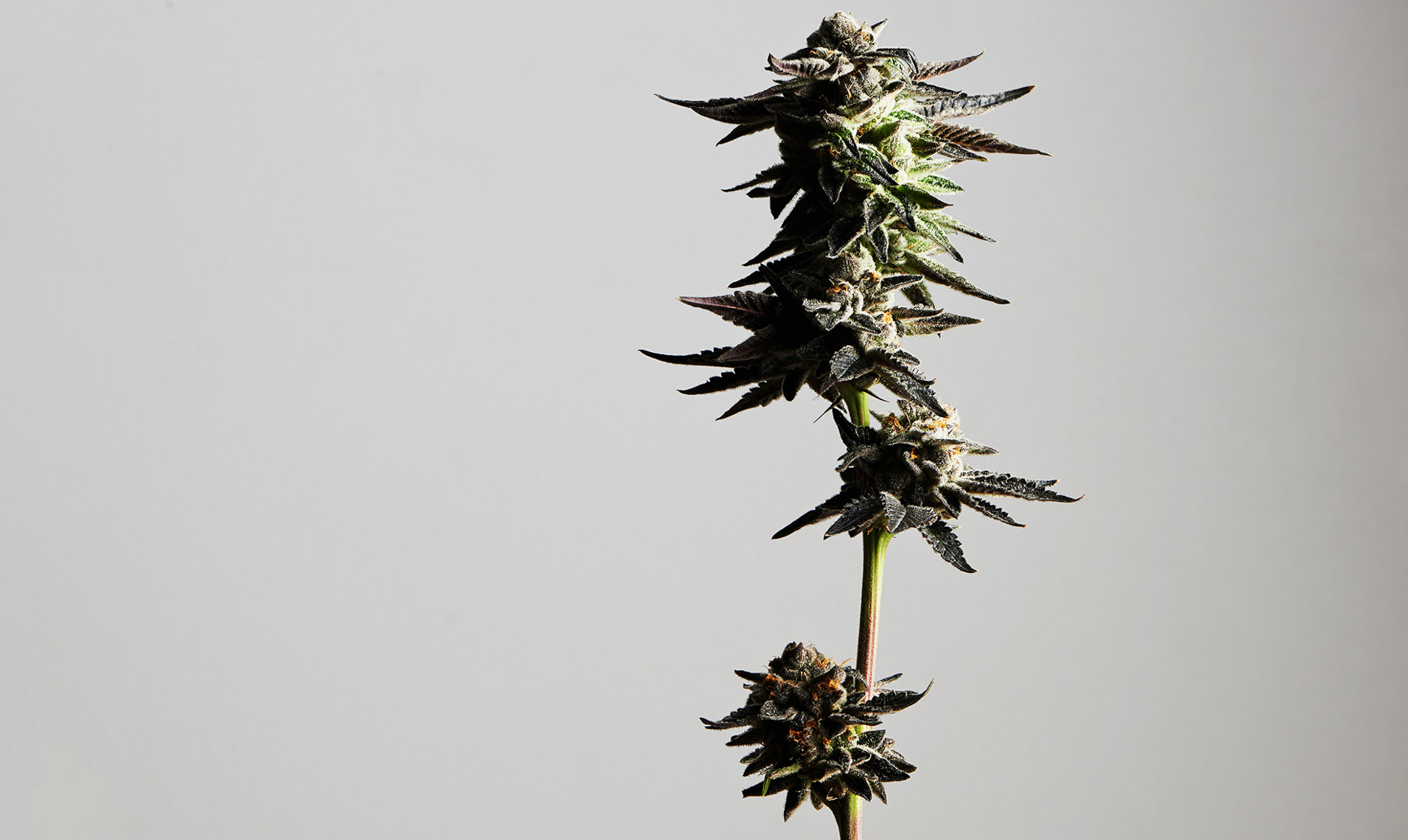 marijuana.photography.sf.4-copy1.jpg