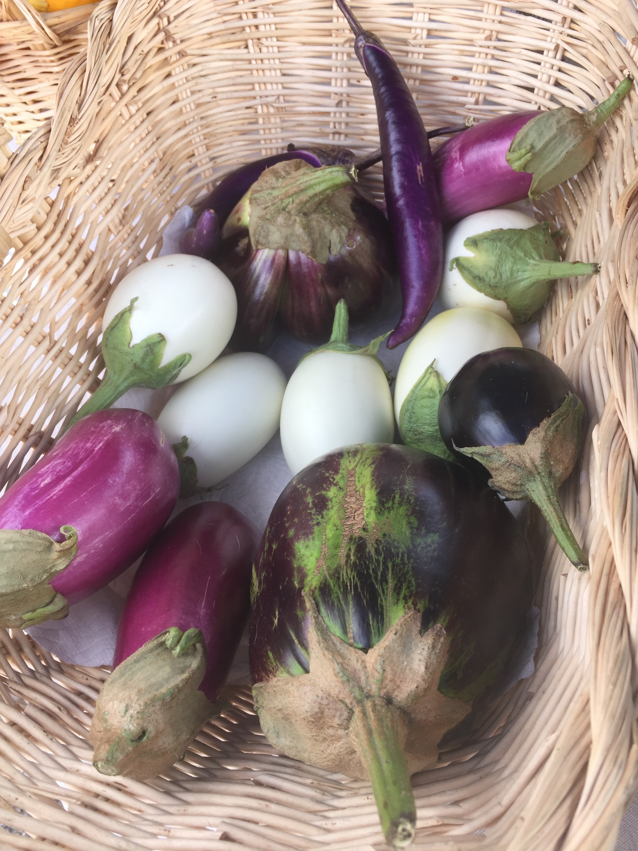 Japanese White Egg, Rosita, New York Improved and Japanese Pickling Eggplants