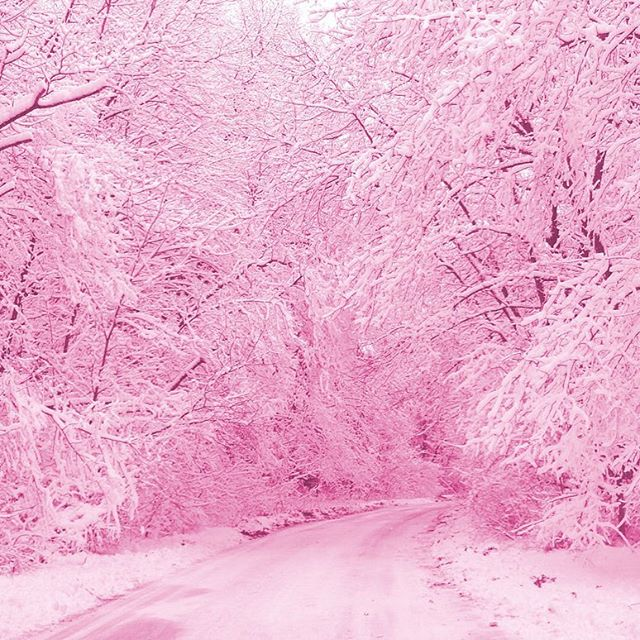 •• what I see when I look outside •• whole world is filtered in PINK!