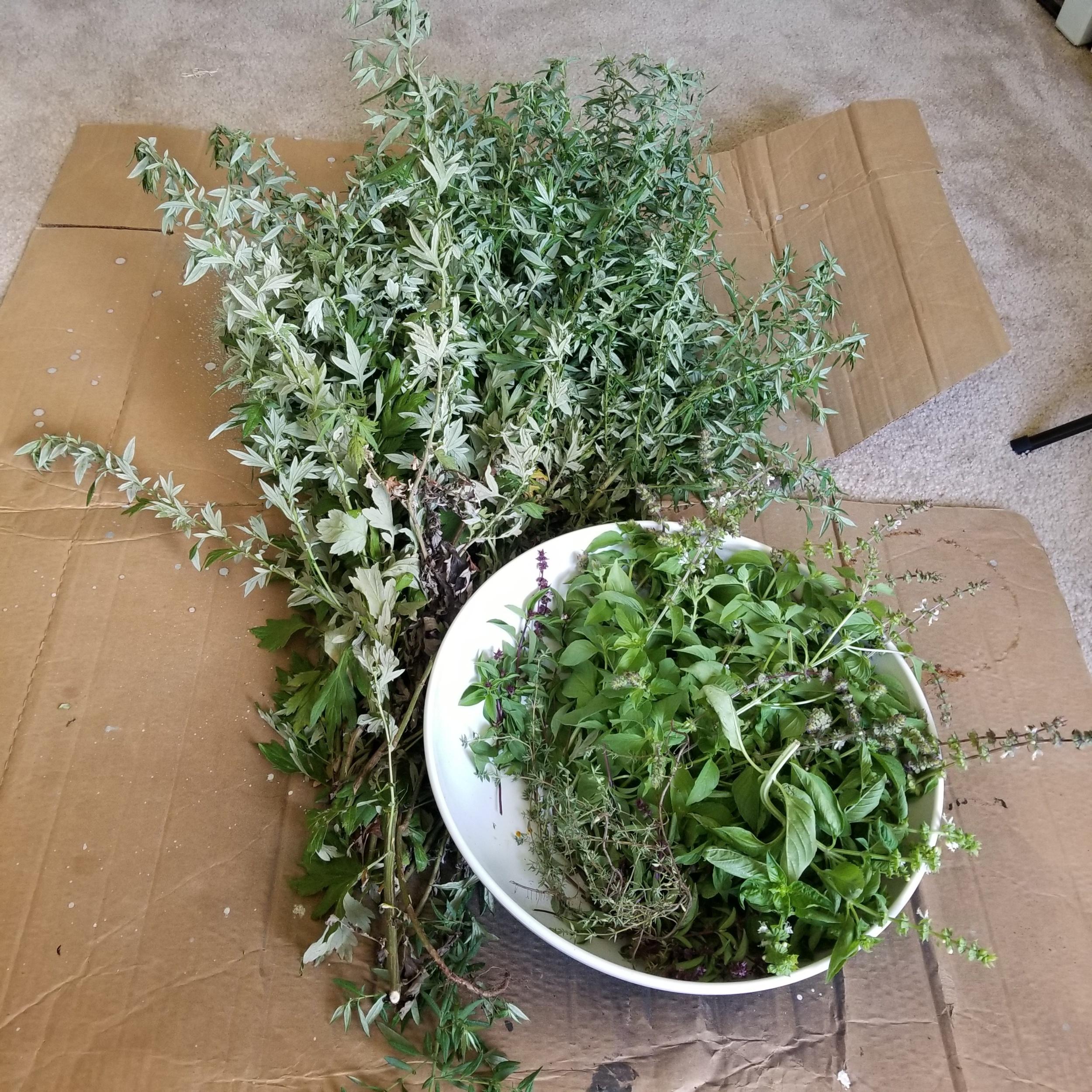 Mugwort & assorted herbs