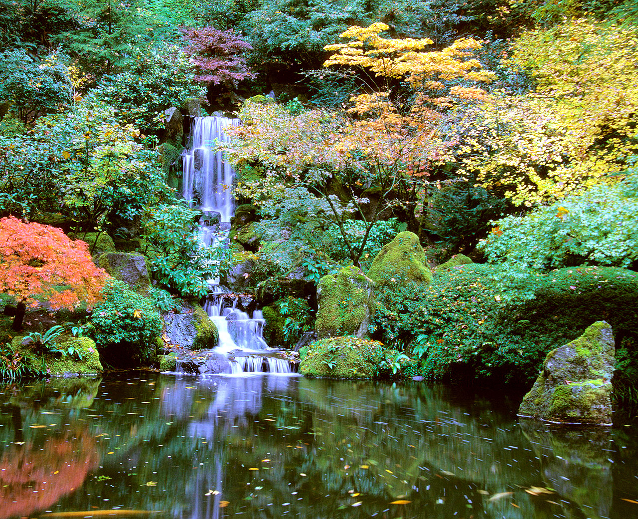 AA_Parks_JapaneseGarden_14_courtesy_JapaneseGarden_DavidMCobb1.jpg