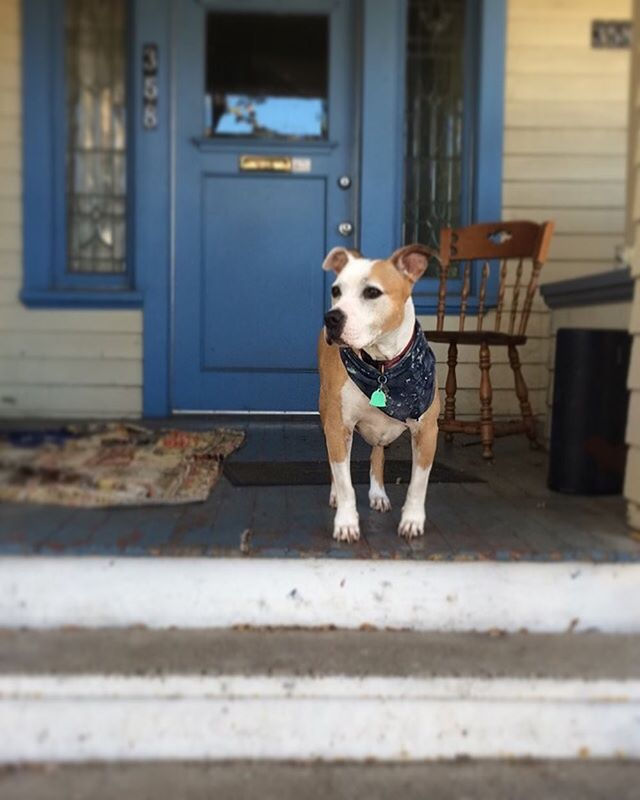 To everyone who has ever loved Kuiper, welcomed her into your home, made space for her on your couch or in your bed, thank you. I had to say goodbye to my best friend last week.  She was the best sidekick, copilot, adventure buddy, protector, and stinker butt I could have ever asked for. I'm so lucky to have found her at that shelter six years ago. We always came as a packaged deal & I'm still not sure what I look like without my dogger right next to me. I think I'll miss falling asleep to the sound of your snores the most, Kuip.  Mika & I are still adjusting to all the new empty spaces where she isn't any more. We'll always love you, sweet beast.