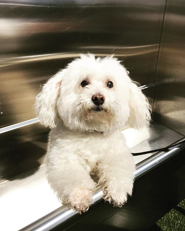 Lucy enjoying a warm bath here at Empire at Burton Way! Happy National Puppy Day! #beverlyhills #nationalpuppyday #puppylife #empireatburtonway #empirepropertygroup