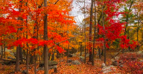 19 sept YK autumn trees.png
