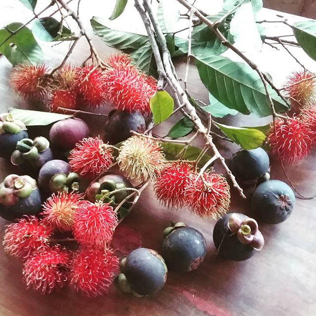 #rambutans#mangosteens#wompoo eco retreat#Daintree Destinations# local fruit#feast#