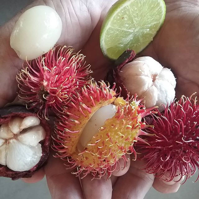 Rambutans# mangosteens# limes# guests# wompoo eco retreat# daintree delights# daintree destination# port douglas and daintree tourism#
