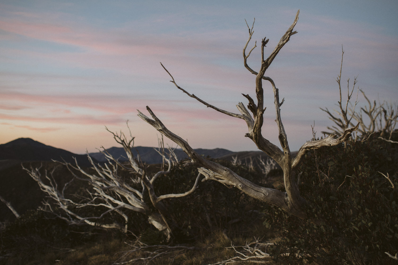 Aaron Shum Photography Film_-9.jpg