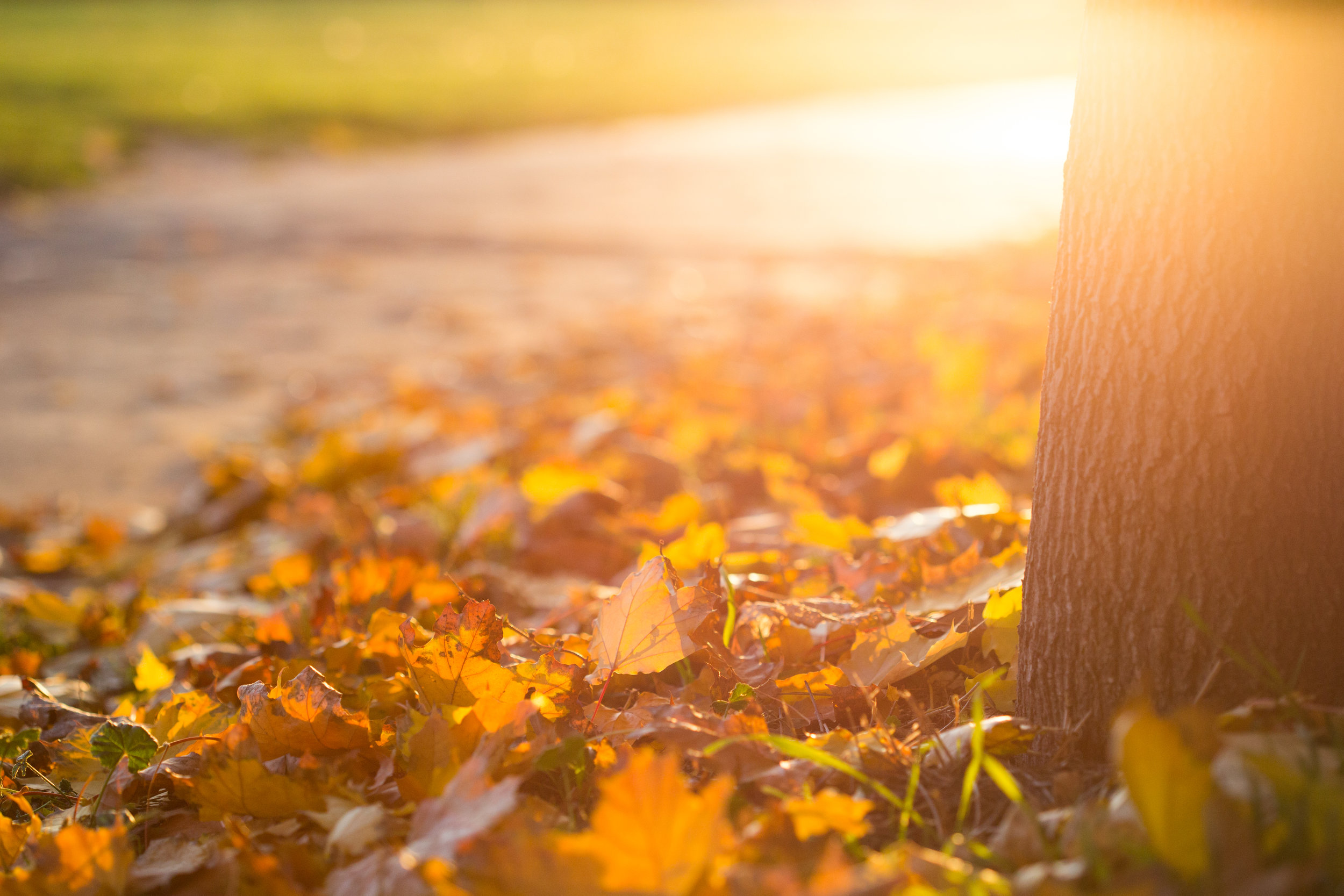 fall-autumn-leaves-on-the-ground-picjumbo-com.jpg