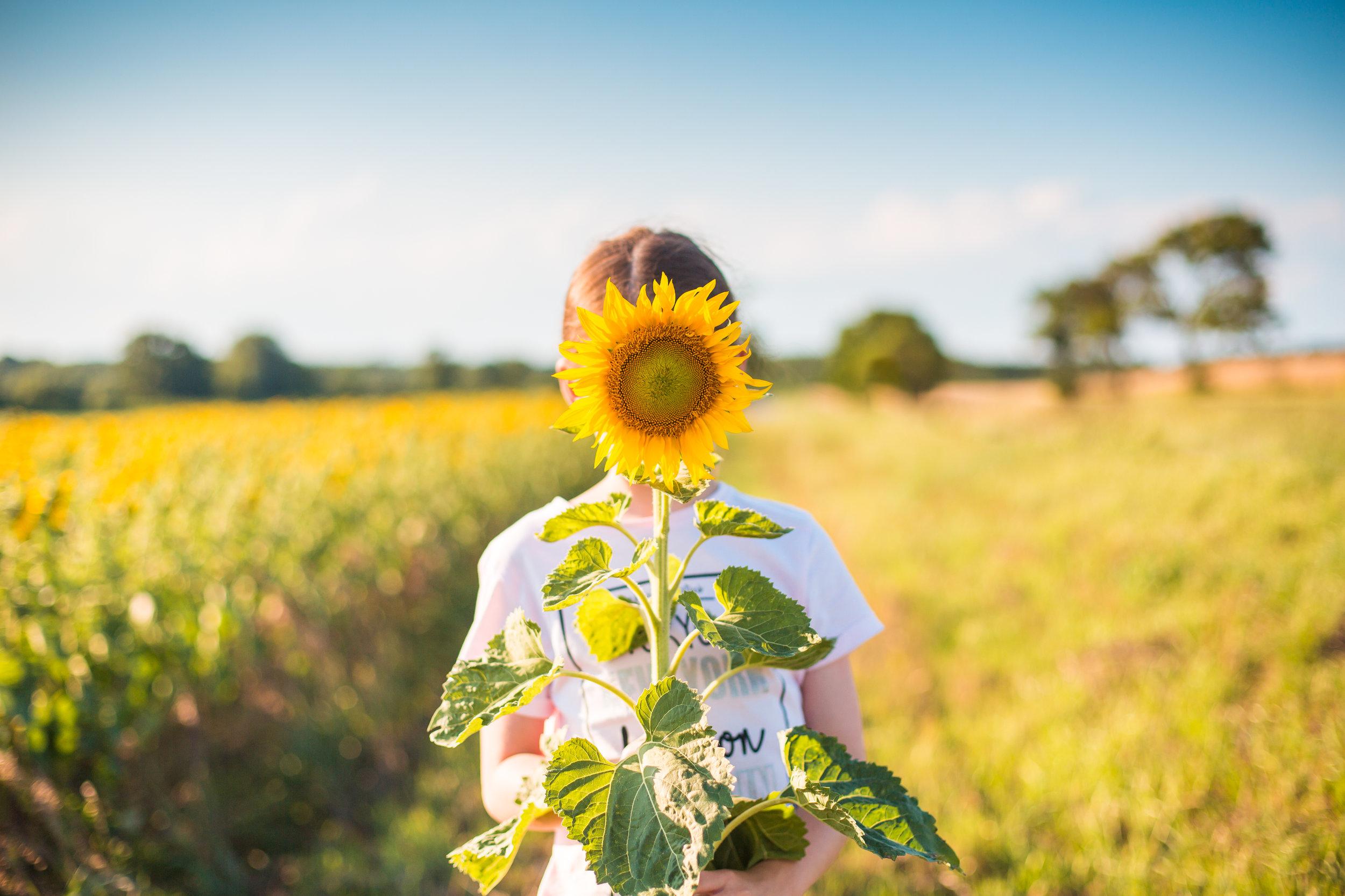 little-girl-with-sunflower-in-a-sunflower-field-picjumbo-com.jpg