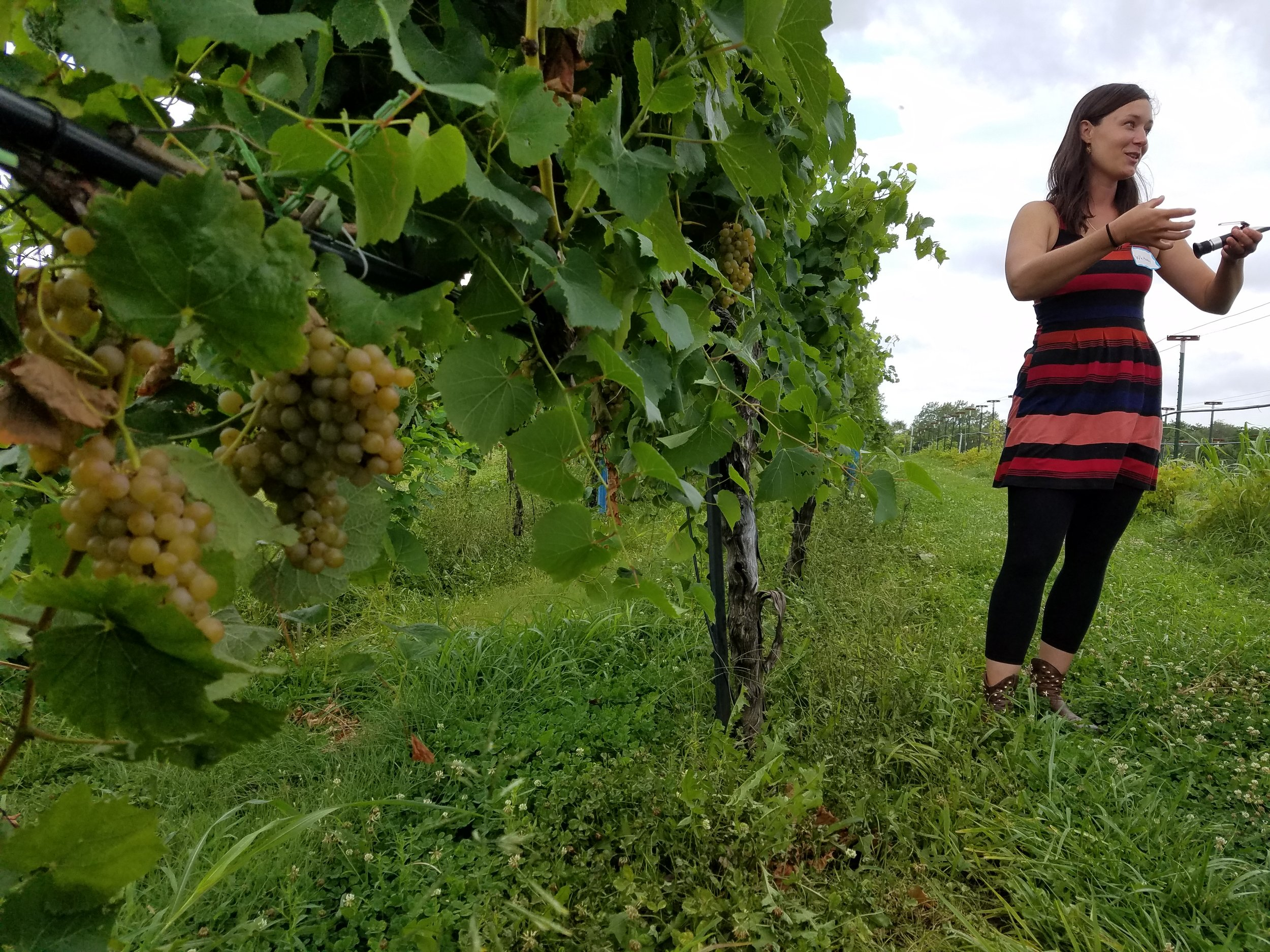 Whitney Ryan, Vox Vineyard's winemaker, leads a tour through the vines on the morning of eclipse day.