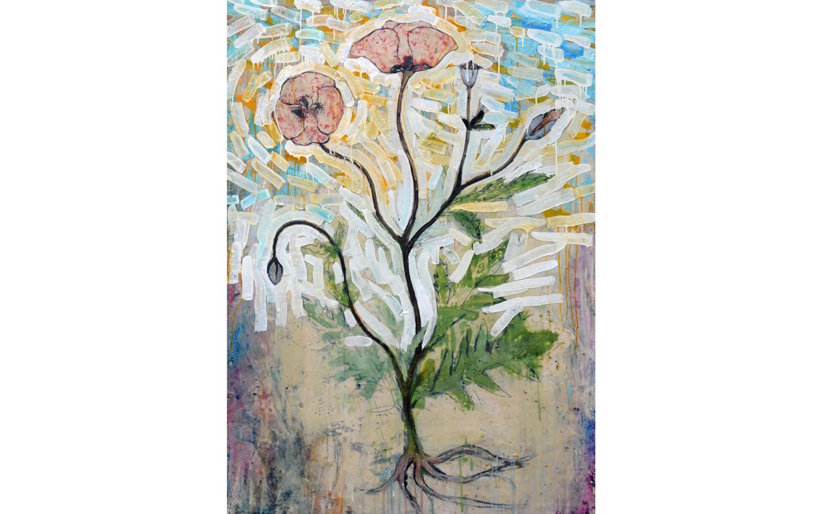 Botanical Study - Papaver Rhoeas