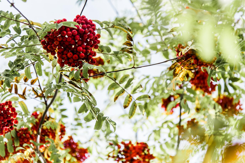 montreal-autumn-walk13.jpg
