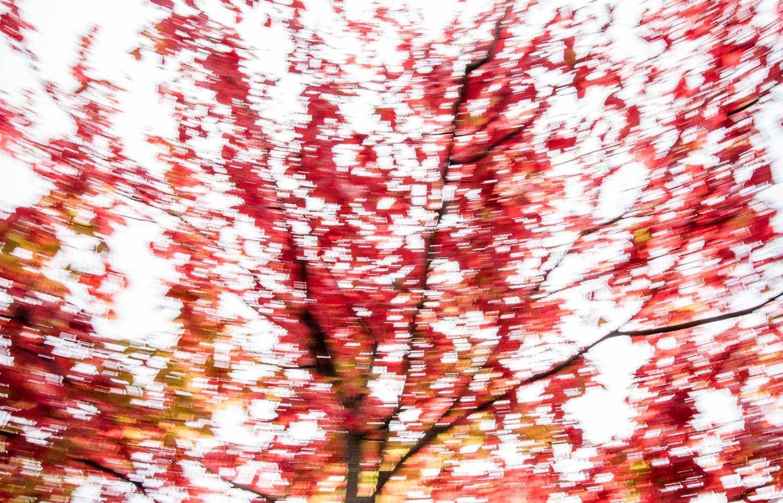 montreal-autumn-walk01-2.jpg