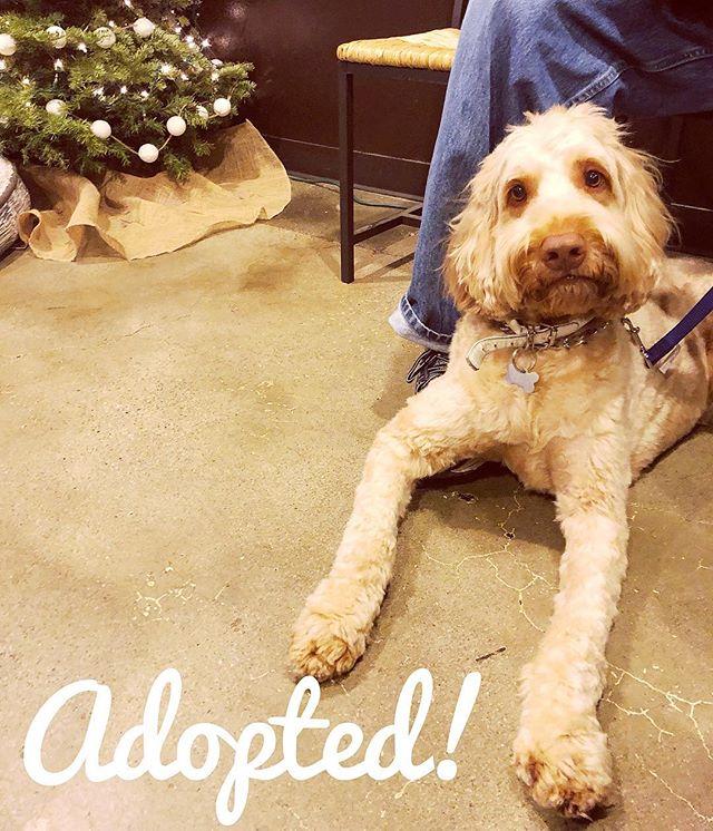 Jack found his people!! Woohoo! Happy life Jack ❤️ #adoptdontshop