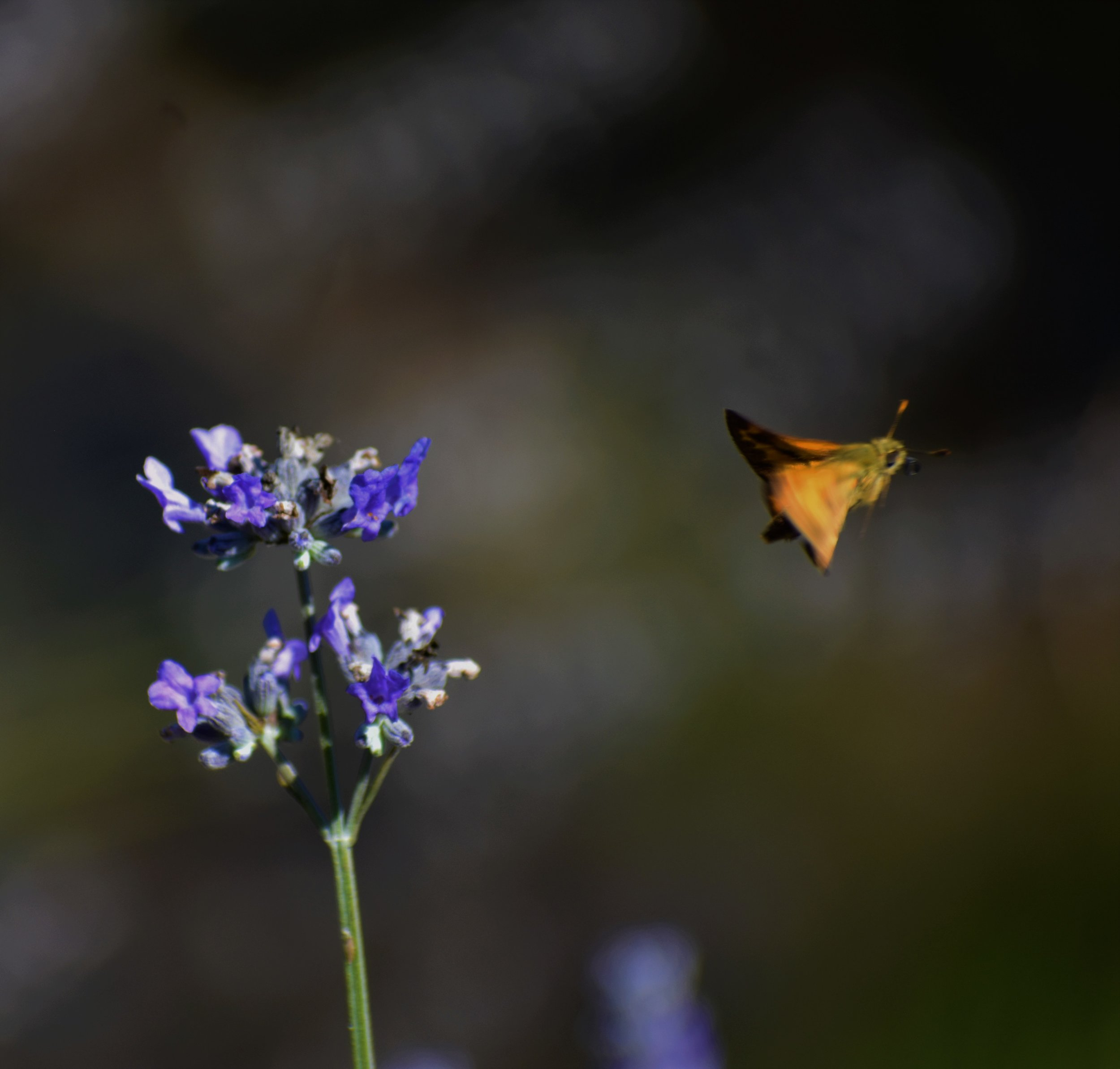 butterfly visits