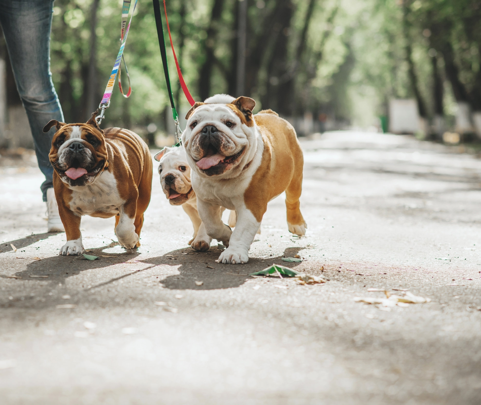 60 MINUTE WALK - Doggie Dreamz offers 60 min walks for your dogs! These walks are private with just your dog(s) with a two dog limit. Our private walks also include freshening their water, administering medication if needed and providing food/treats if requested.
