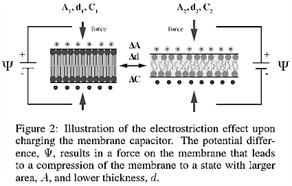 The Effect of Electrostriction on a Capacitor