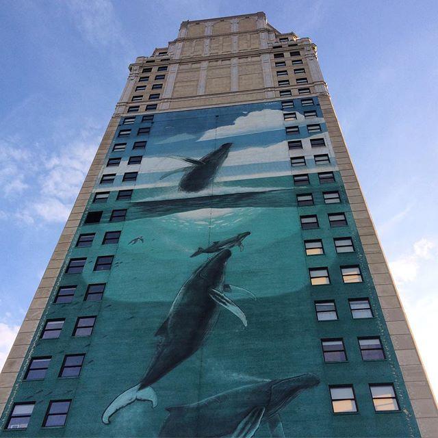 Whales. 🐋 #connectdetroit