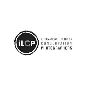10.ilcp.png