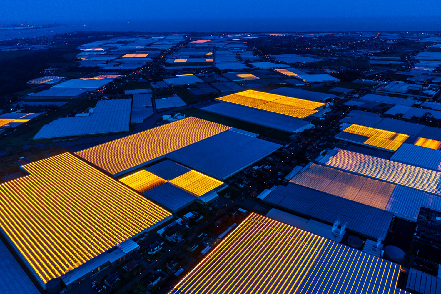 """Westland – the Dutch horticultural cluster and """"Silicon Valley"""" for plant growing and green innovation."""