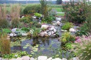 Beautiful Pond 1