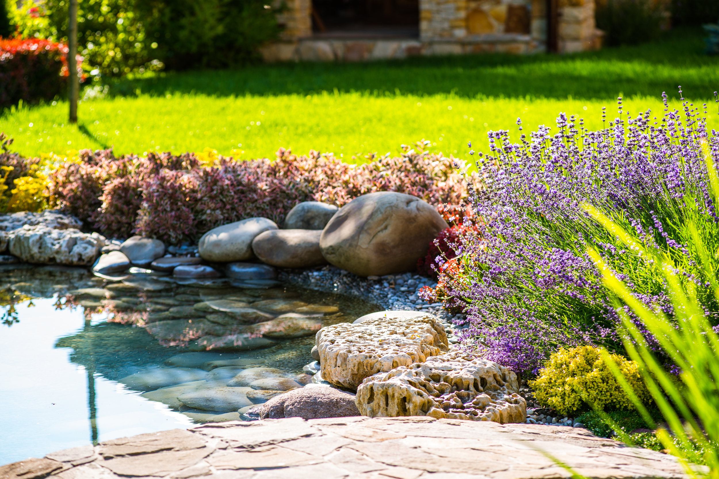 Essential Features For A Backyard Water Garden In State College