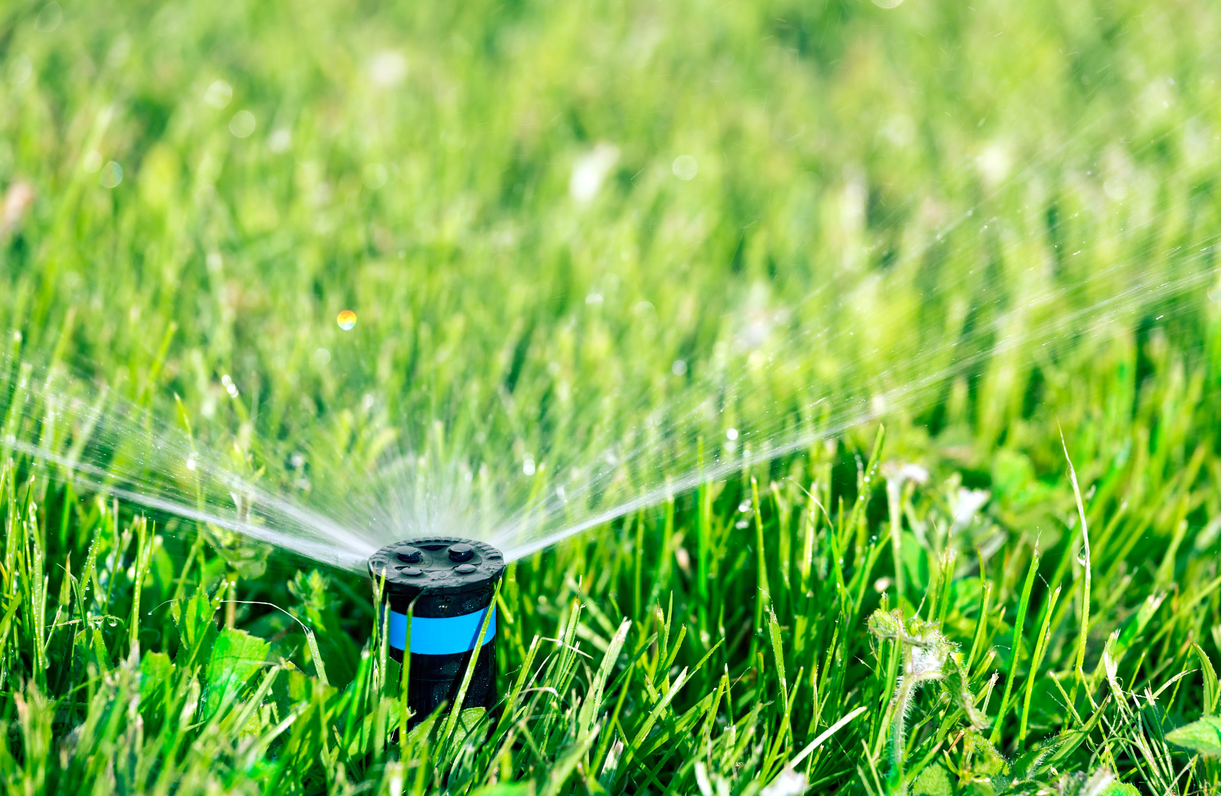 Our Garden Supply's Tips for Lawn Watering in Harrisburg, PA