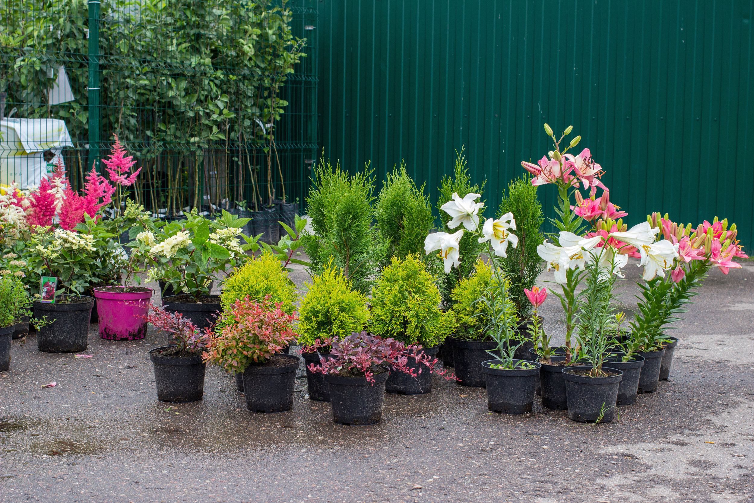 7 Qualities to Look for in a Garden Supply Store