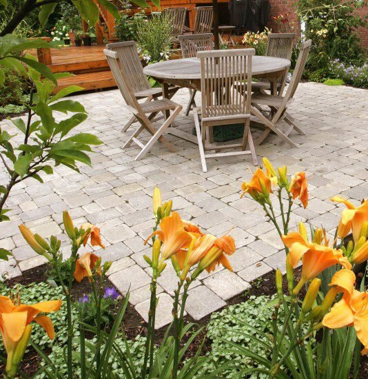 How to Choose Healthy Perennials at Your York, PA, Plant Nursery.jpg