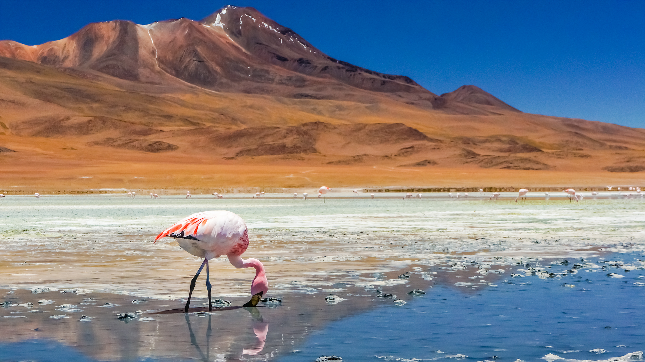 For the first time in 54 years the Atacama desert will play host to a Total Solar Eclipse. -