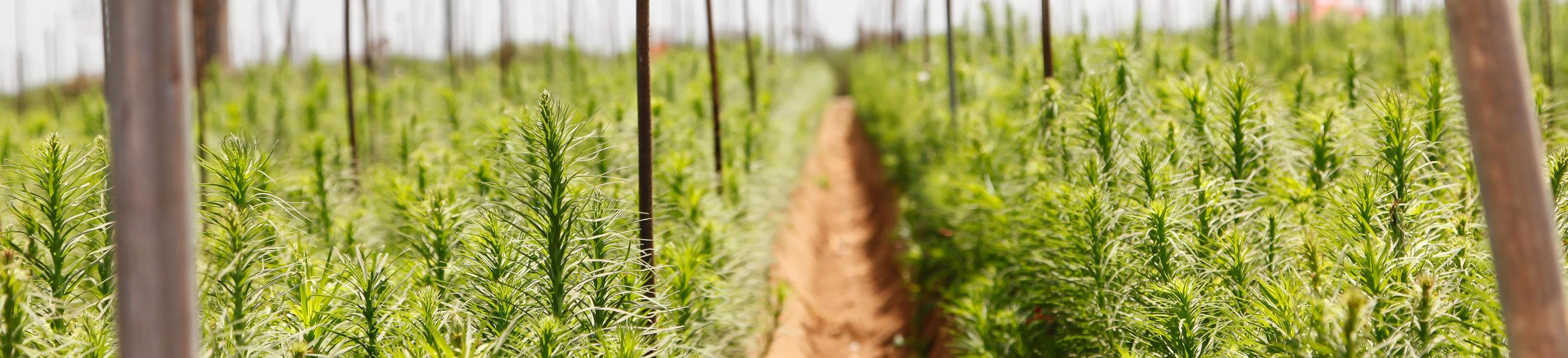 Farm Floral - Mellano and Company Farm Products