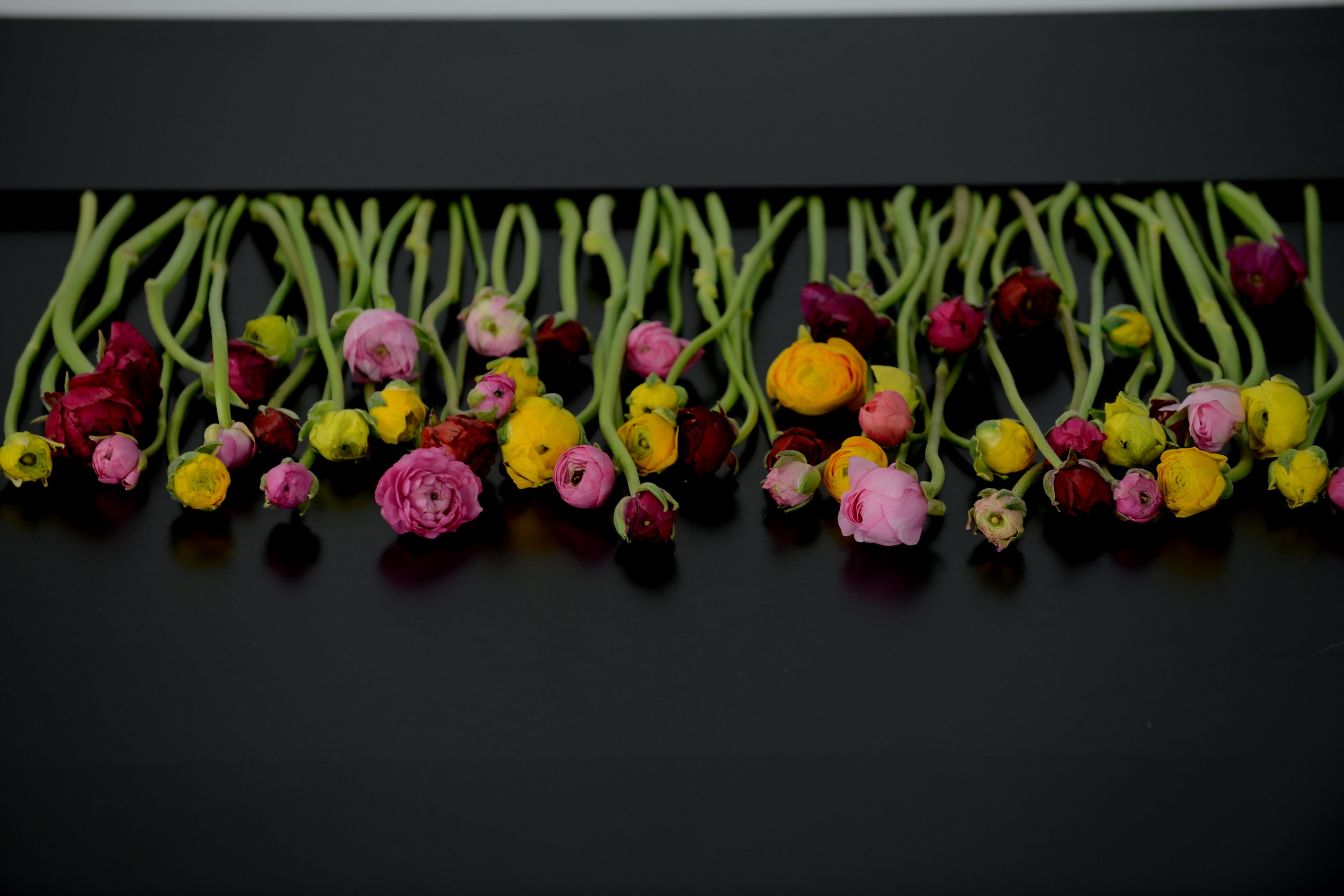 Season of spring - Ranunculus Flower Fields, Peonies, Tulips, Easter and More!