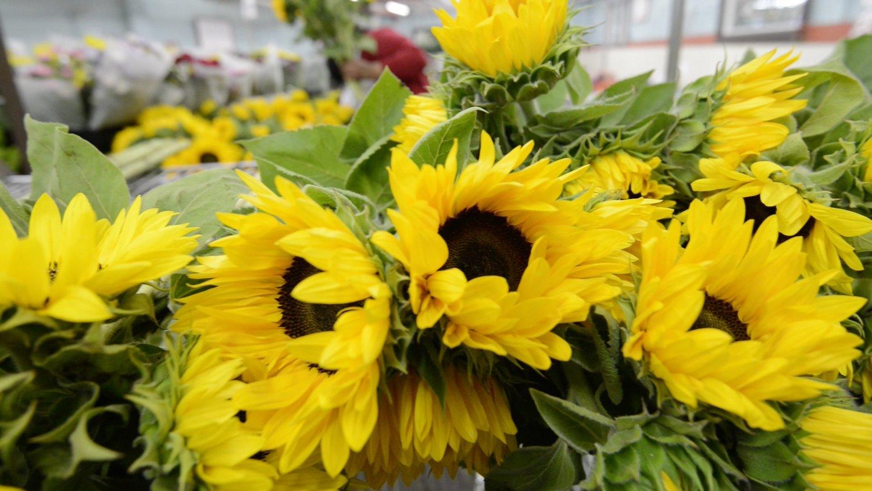 flower+7.jpg
