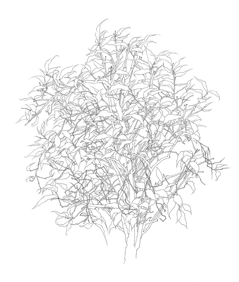 39 Tree 1995.jpg