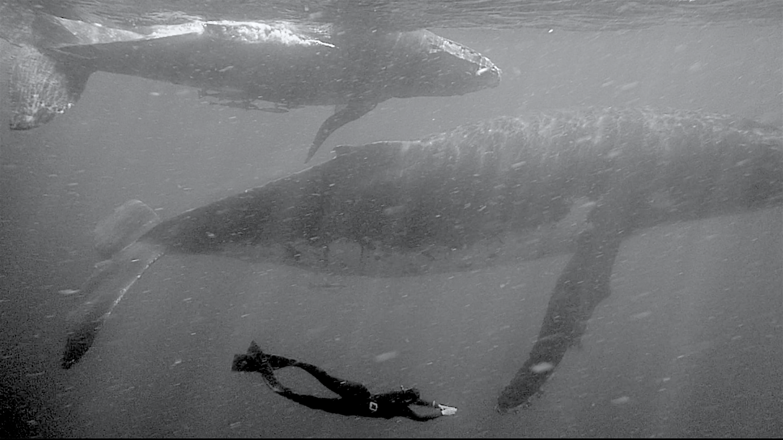 humpback whales expedition | pangeaseed