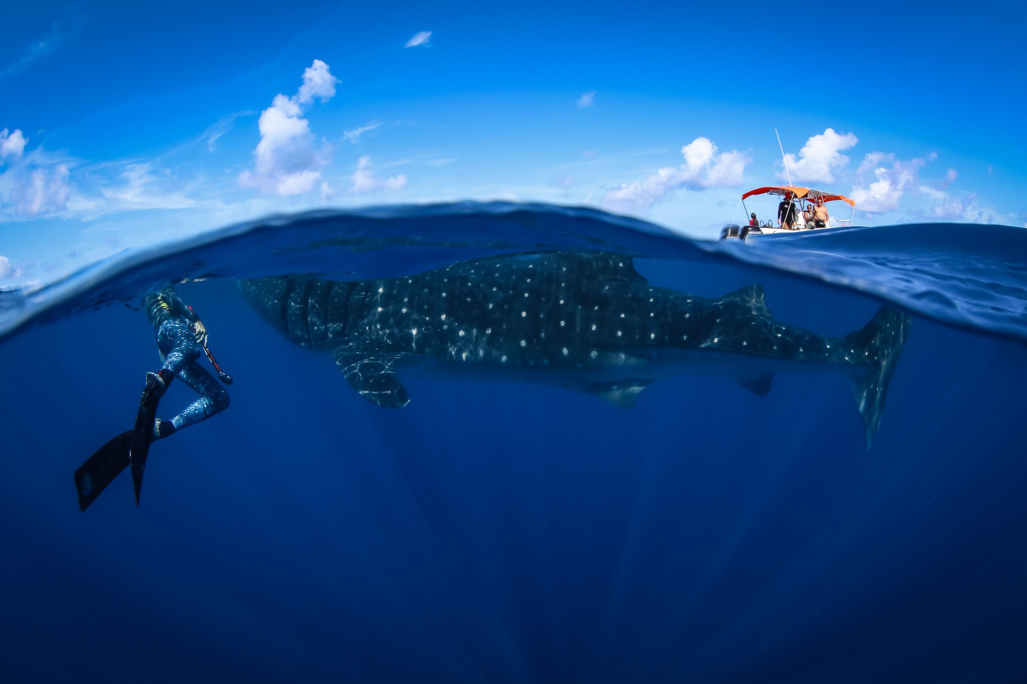 whale shark expedition | pangeaseed