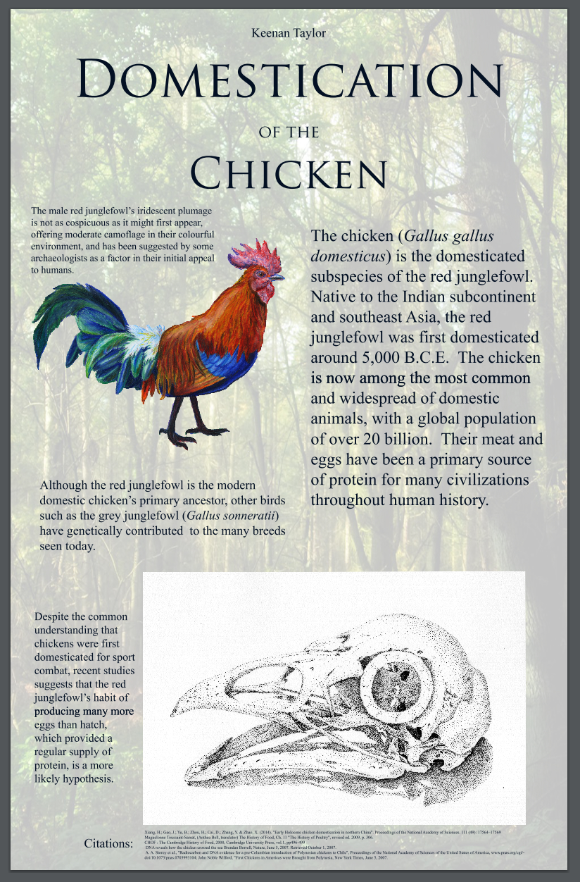 Domestication of the Chicken poster
