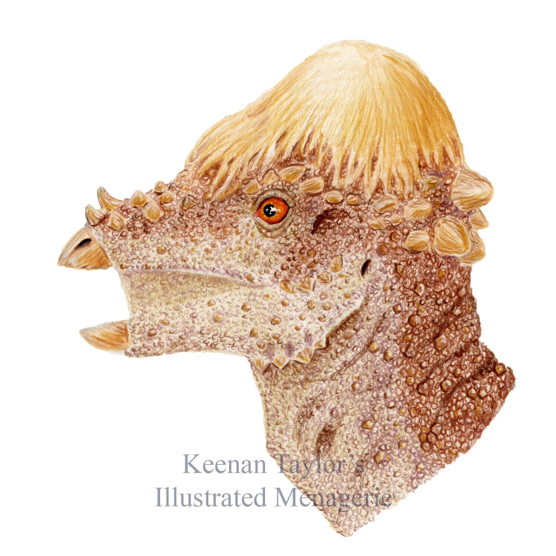 Adult Pachycephalosaurus wyomingensis