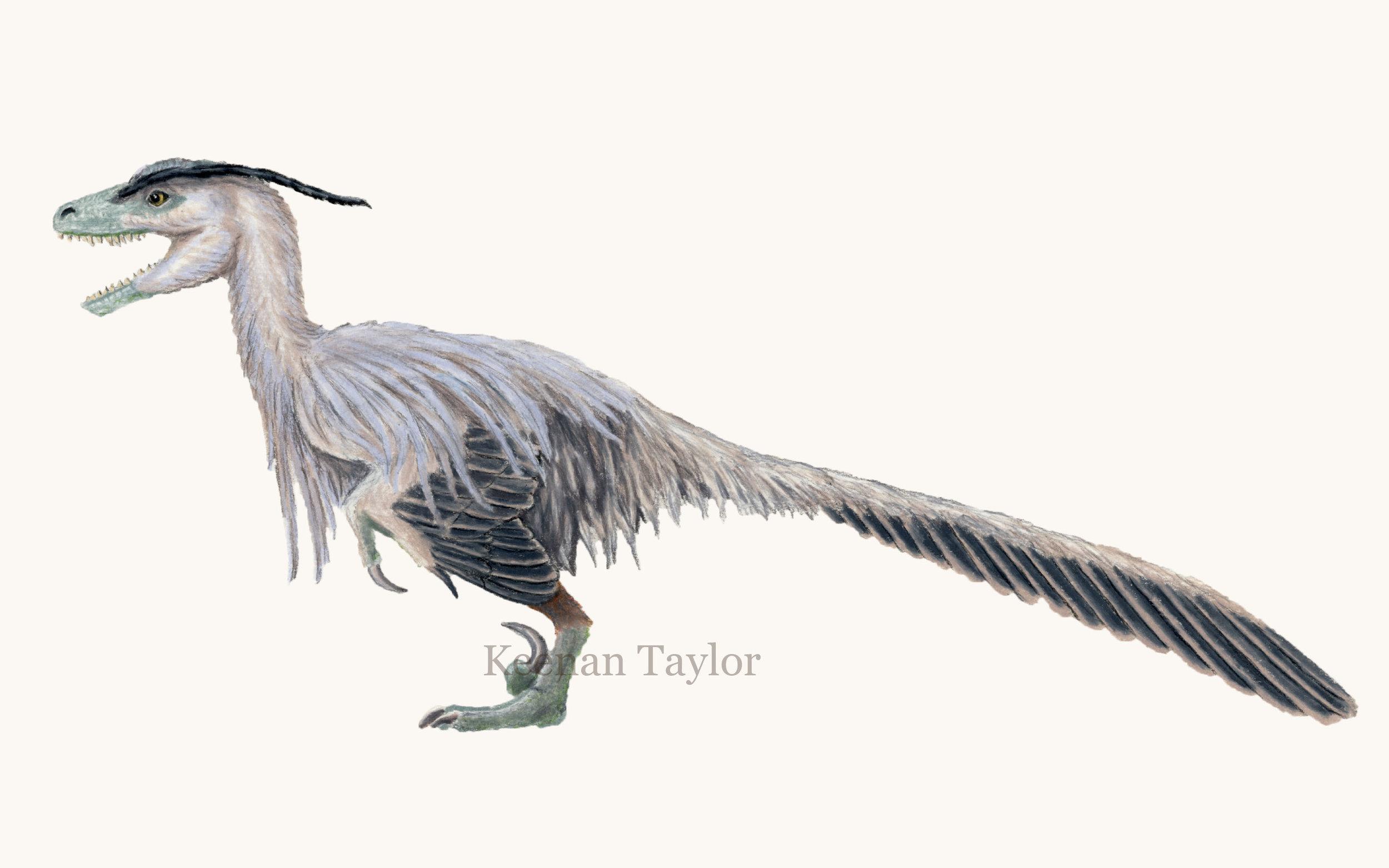 Deinonychus antirrhopus (heron)